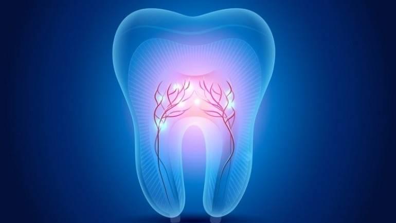 Los dientes de leche, fuente de células madre