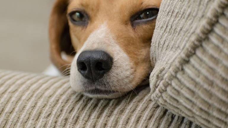 Las mascotas también se estresan: estos son los síntomas